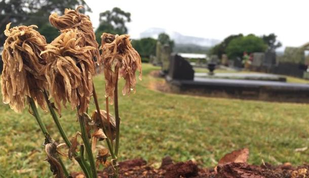 dead flower grave